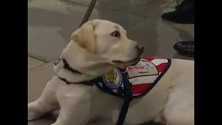 ძაღლი სალი, უფროსი ჯორჯ ბუშის დაკრძალვაზე