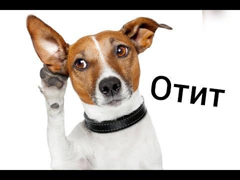 ОТИТ//воспаление среднего уха