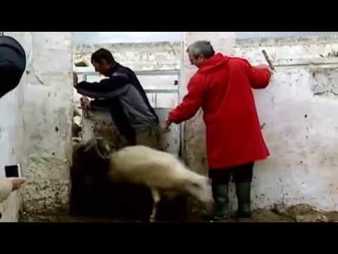 Consegnare su un lyambliya in Ufa - Segni di vermi e sintomi della loro presenza a un organismo