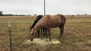 Feeding Hay To Horses - Is There A Right Way and A Wrong Way - Colic in Horses
