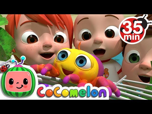 Itsy Bitsy Spider   +More Nursery Rhymes & Kids Songs - CoCoMelon