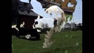 preview picture of video 'Mazurski raj - Nowe Ramoty Łukta'