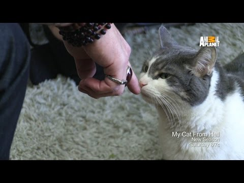 Video trailer för My Cat From Hell | Returns Saturday 4/4 at 8p E/P