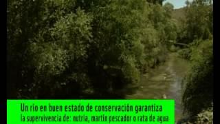 Video del alojamiento La Estación de la Vid