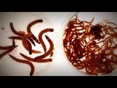 Паразиты кишечника очистка