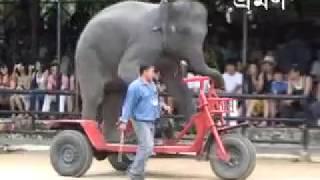 ELIPHANT sarkas 4◆By Ansari Tech World