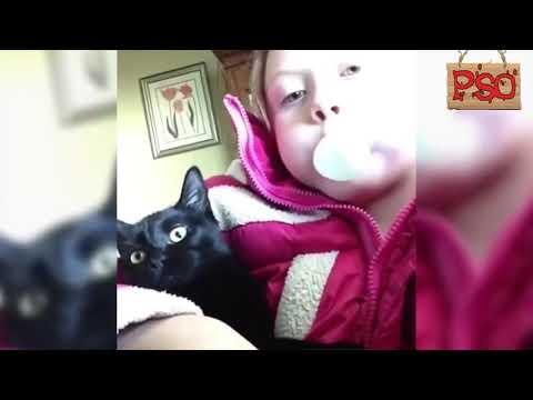 Коты с озвучкой 2019-2018, ЛУТШИЕ ПРИКОЛЫ 2019 ГОДА
