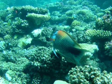 Korallen und Fische, El Nabaa,Ägypten