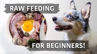 Raw Food Diet For Dogs - Balancing Explained For Beginners