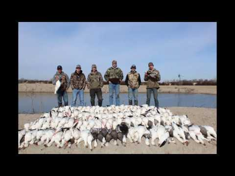 farm-pond-snow-goose-jump-301