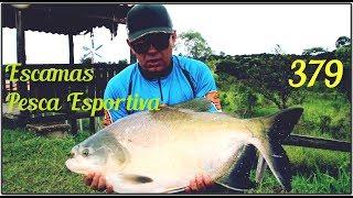 Muitos peixes no Escamas Pesca Esportiva - Fishingtur na TV 379