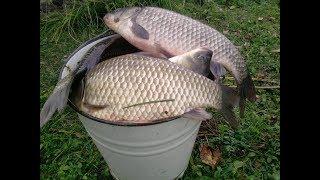 Насадки для ловли рыбы летом