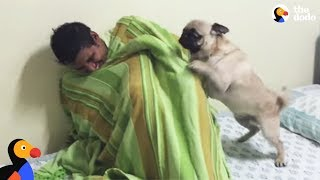 Download Youtube: Pug Dog FREAKS OUT After Reunited With Hiding Uncle | The Dodo