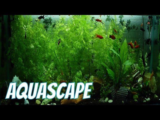 Aquascape Udang Ikan Hias Cantik Relaxing Music Instrumental