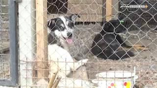 """У МКП """"Притулок для тварин"""" живе вдвічі більше за норму собак."""