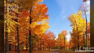 Осень прекрасна😍 зависит все от взгляда 😃