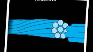 Cell - Intermediate Filaments