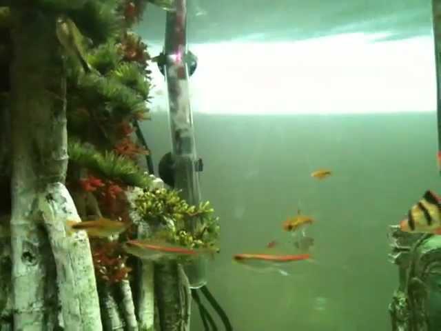 Tropical Fish Tank 155 Litres/ 41 gallons, Tour.