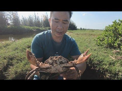 食肉大青蟹死死盘着鱼儿开吃,被赶海的玉平发现,直接一举拿下!