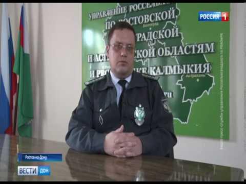 С помощью системы «Меркурий» Управление Россельхознадзора выявило более 28 тонн рыбной продукции неизвестного происхождения в Ростовской области