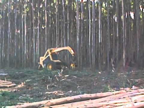Bell Logger sawing eucalyptus trees on plantations in South Africa