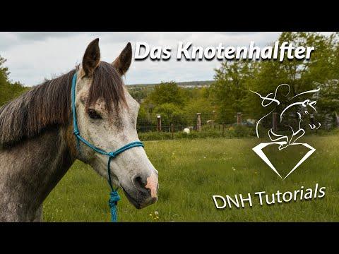 Ausrüstung im Natural Horsemanship: Das Knotenhalfter und Bodenarbeitsseil