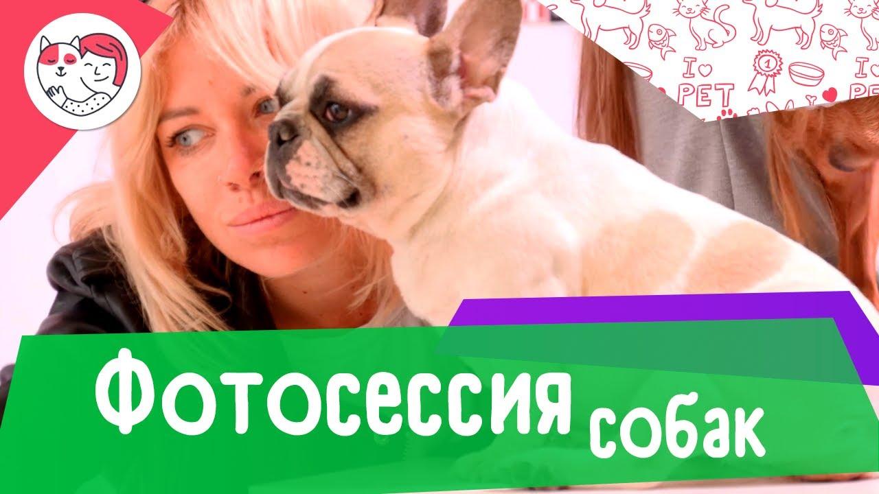 Крупнейшая фотосессия собак маленьких пород