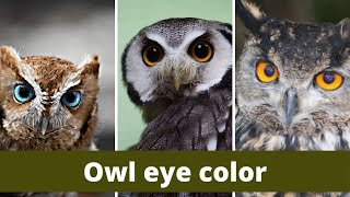 Owl eye color || Owl eyes colors || The Eye Colors of Owls
