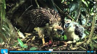 Neil Rettig and Laura Johnson discuss the Philippine Eagle Project
