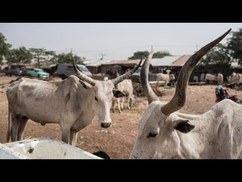 WE DON'T WANT SUSPENSION ON RUGA SETTLEMENT