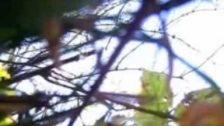 Video Just & moongaze