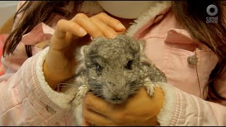 Hospital Veterinario - Chinchilla