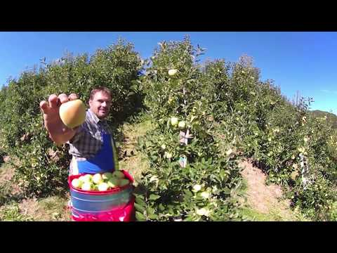 South Tyrolean Apples - 360° Video
