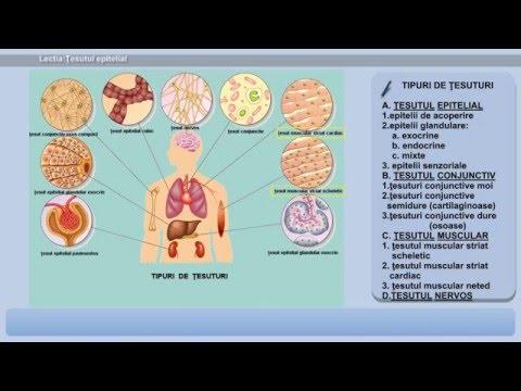 Unguente naturale pentru durerile articulare
