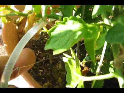 DIY Drip Irrigation Details