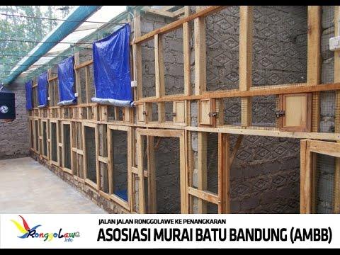 Video KISAH SUKSES : Belajar Ternak Murai Batu Rumahan Dari AMBB Bandung