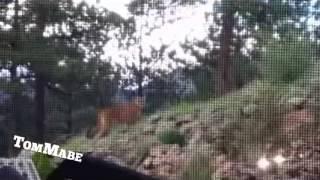 بالفيديو.. قِطّ منزلي يواجه أسدًا جبليًّا