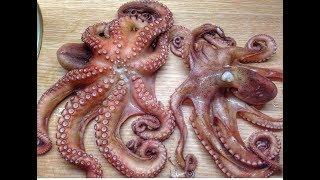 Как приготовить осьминога пошаговый рецепт