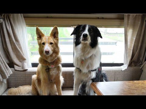 Protéger ses chiens contre les tiques et les puces de façon naturelle