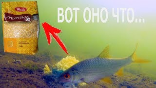 Как приготовить кукурузную крупу для рыбалки