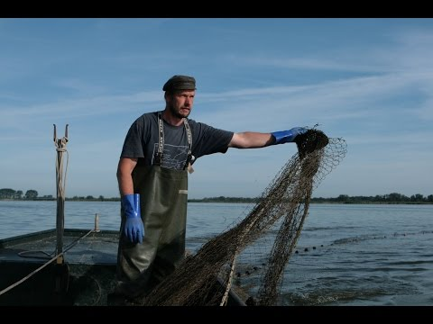 Havelland: Mit Fischer Schröder auf dem Gülper See