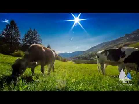 Pontedilegno-Tonale Summer