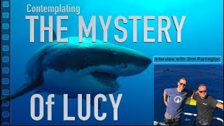 Contemplating Lucy: Guadalupe's Most Mysterious White Shark