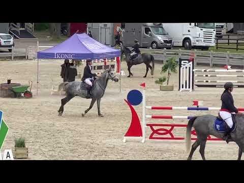 5yo horse for sale