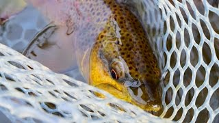 GOOD OLE' TENNESSEE - Fly Fishing the Watauga River