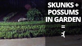 Get Rid of Skunks and Possums in Your Garden
