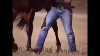 🐴Танец лошади с хозяином😀красиво
