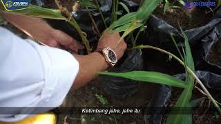 Video : Warga Manfaatkan Sertipikat Tanah Dalam Usaha Pertanian