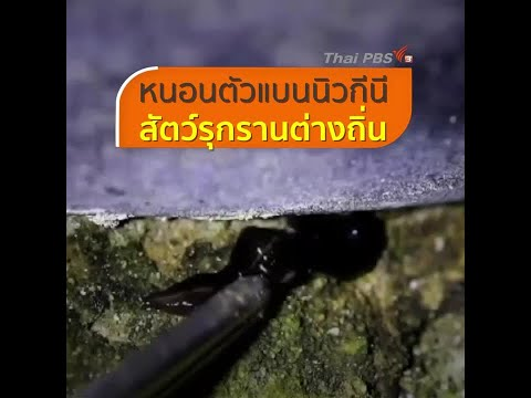 Nemozol ยา Giardia