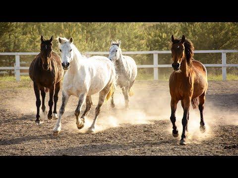 Как заработать на лошадях | Бизнес-план